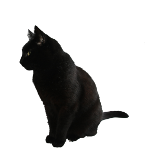 black_cat_png_by_camelfobia-d5jpxce