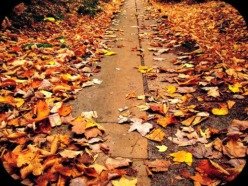 autunno7